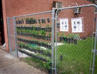 Small-space-vertical-garden-with-recycled-soda-bottles